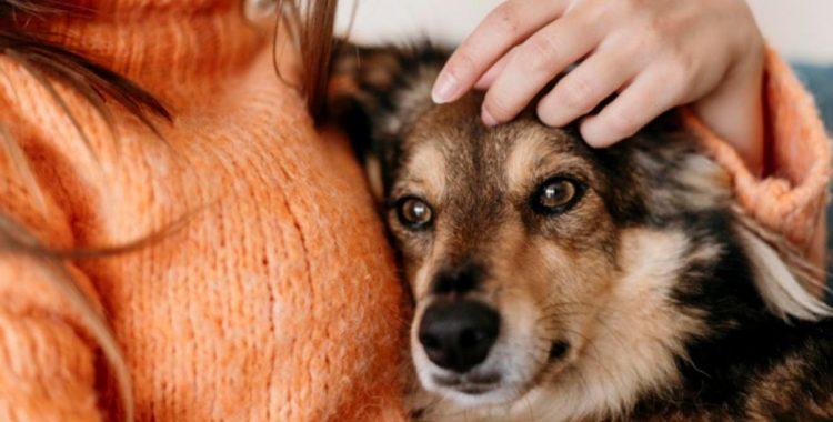 Un chien peut-il oublier son maître ?
